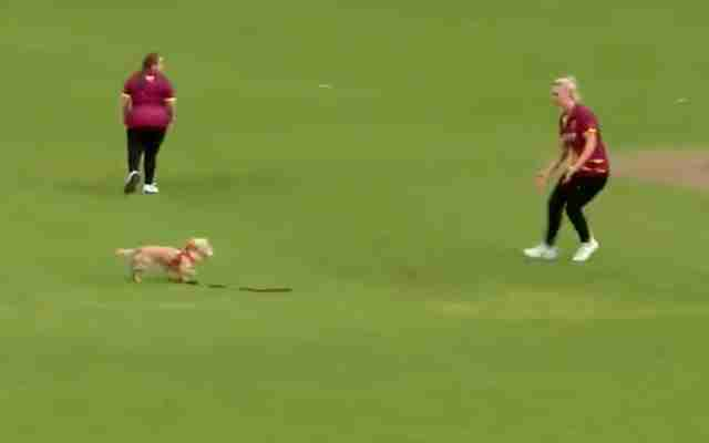 Watch in video who runs away with the ball in a women's cricket game in Ireland
